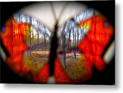 Butterfly Forest Metal Print by Debra     Vatalaro