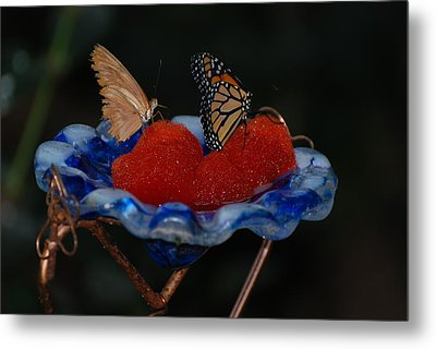 Metal Print featuring the photograph Butterfly Fruit by Richard Bryce and Family