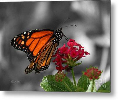 Metal Print featuring the photograph Butterfly Garden 01 - Monarch by E B Schmidt