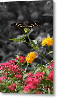 Metal Print featuring the photograph Butterfly Garden 05 - Zebra Heliconian by E B Schmidt