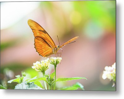 Butterfly - Julie Heliconian Metal Print