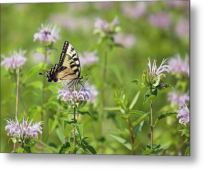 Butterfly Metal Print by June Marie Sobrito