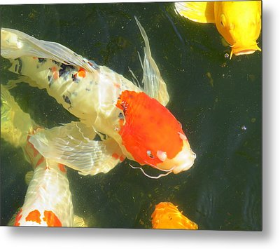 Butterfly Koi Metal Print by Phyllis Beiser