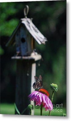 Metal Print featuring the photograph Butterfly by Lila Fisher-Wenzel