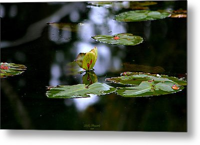 Butterfly Lily Pad Metal Print by Jeanette C Landstrom