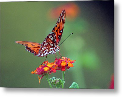 Butterfly Majestic Metal Print