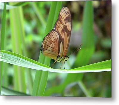 Metal Print featuring the photograph Butterfly by Manuela Constantin