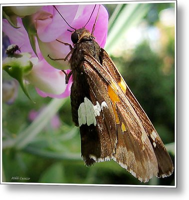 Butterfly Metal Print by Mikki Cucuzzo