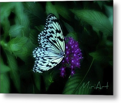 Metal Print featuring the photograph Butterfly by Miriam Shaw