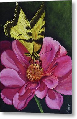 Butterfly On A Pink Daisy Metal Print by Silvia Philippsohn