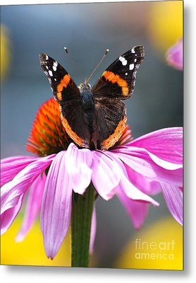 Metal Print featuring the photograph Butterfly On Cone Flower by Lila Fisher-Wenzel