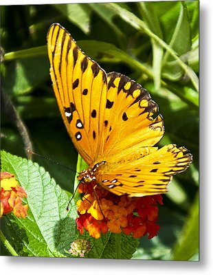 Metal Print featuring the photograph Butterfly On Lantana by Bill Barber