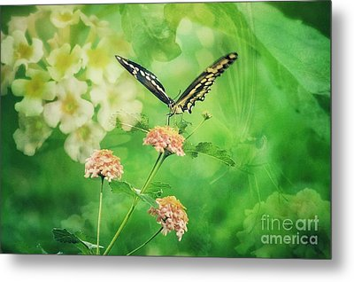 Butterfly On Lantana Montage Metal Print by Toma Caul