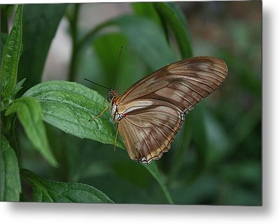 Metal Print featuring the photograph Butterfly On Leaf by Cathy Harper