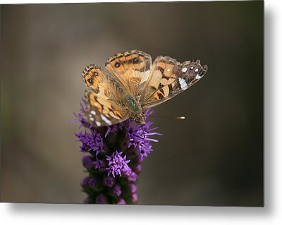 Metal Print featuring the photograph Butterfly In Solo by Cathy Harper