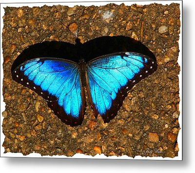 Butterfly Shadow Metal Print by Judy  Waller