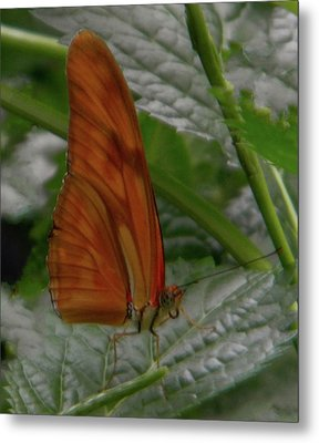 Metal Print featuring the photograph Butterfly Smile by Manuela Constantin