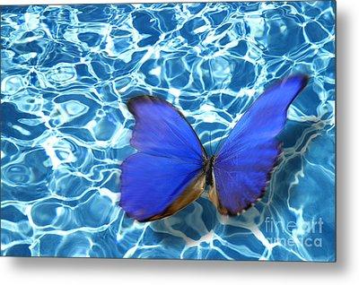 Butterfly Metal Print by Tony Cordoza