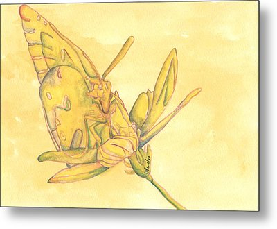 Butterfly  Metal Print by Versel Reid