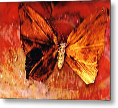 Butterfly With Dark Wing Metal Print by Anne-Elizabeth Whiteway