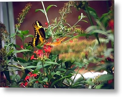 Butterfly World Watercolor 2 Metal Print by Steve Ohlsen