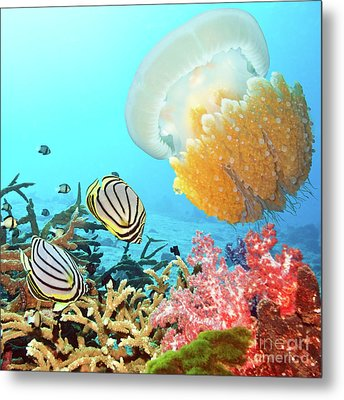 Butterflyfishes And Jellyfish Metal Print by MotHaiBaPhoto Prints