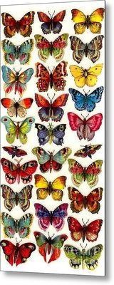 Butterflys Metal Print by Pg Reproductions
