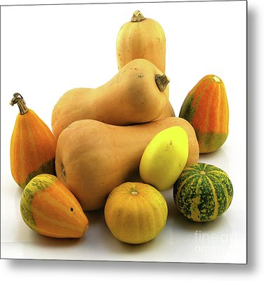 Metal Print featuring the photograph Butternut Squash With Gourds  by Ricky L Jones
