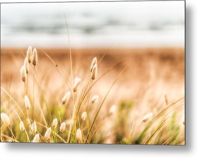Button Grass Metal Print by Jonathan Williams