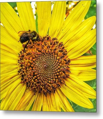 Buzz Word-sunflower Metal Print