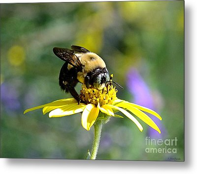 Buzzing By Metal Print
