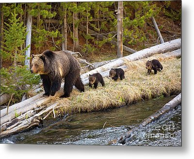 By The River Metal Print by Aaron Whittemore