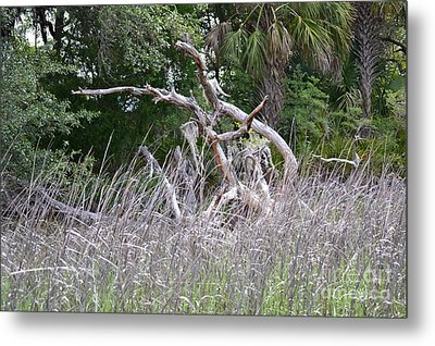 Metal Print featuring the photograph Cabbage Palms And Driftwood by Carol  Bradley