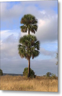 Metal Print featuring the photograph Cabbage Palms by Peg Urban