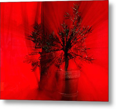 Metal Print featuring the photograph Cabin Fever Dance by Susan Capuano