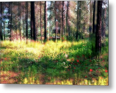 Metal Print featuring the photograph Cabin In The Woods In Menashe Forest by Dubi Roman