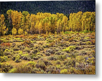 Cache La Poudre River Colors Metal Print by Jon Burch Photography