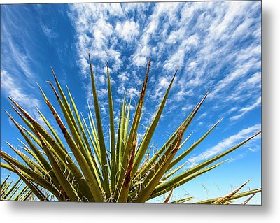 Cactus And Blue Sky Metal Print by Amyn Nasser
