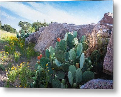 Cactus And Granite    9234 Metal Print by Fritz Ozuna