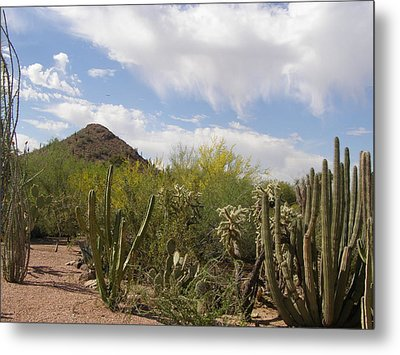 Metal Print featuring the photograph Cactus And Sand by Jeanette Oberholtzer
