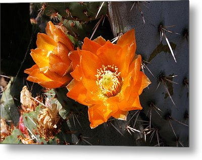Metal Print featuring the photograph Cactus Flower by Gary Brandes