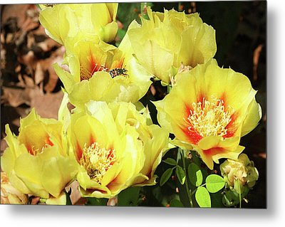 Metal Print featuring the photograph Cactus Flowers And Friend by Sheila Brown