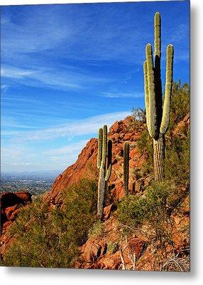 Cactus On Camelback 14x17 Metal Print