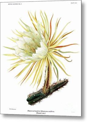 Cactus Metal Print by Ramneek Narang