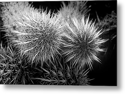 Metal Print featuring the photograph Cactus Spines by Phyllis Denton
