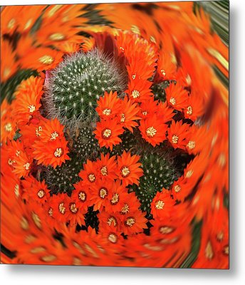 Cactus Swirl Metal Print