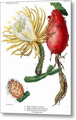 Cactus Vintage Print Metal Print by Ramneek Narang
