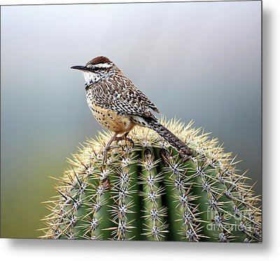 Cactus Wren On Saguaro Metal Print
