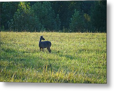 Cades Doe Metal Print by Laurie Perry