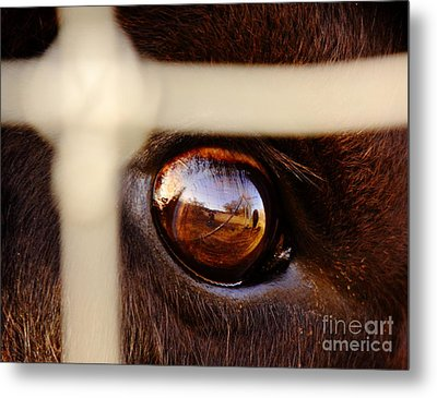 Caged Buffalo Reflects Metal Print by Robert Frederick